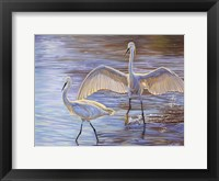 Framed Light Dance (Snowy Egrets)