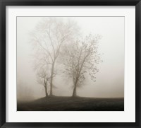 Framed Four Trees in Fog