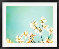 Framed Blossoms Adrift