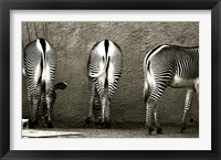 Framed Zebra Butts