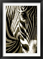 Framed Zebra Head