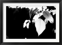 Framed White Leaves