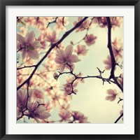 Framed Pink Blossoms