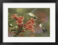 Framed Hummingbirds and Trumpet Flowers