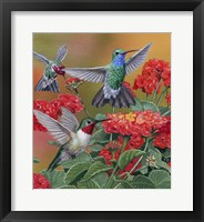 Framed Hummingbirds & Flowers