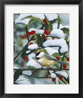 Framed Chickadees And Holly Branch