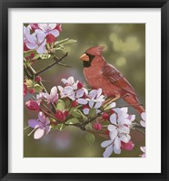Framed Cardinal with Apple Blossoms