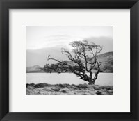 Framed Connemara Tree I