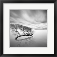 Framed Water Tree VII