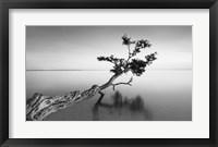 Framed Water Tree IX