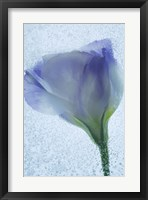 Framed Flowers on Ice-14