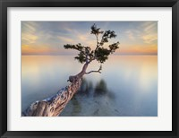 Framed Water Tree XIV