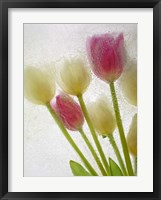 Framed Flores Congeladas 605