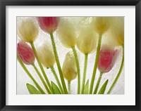 Framed Flores Congeladas 610
