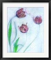 Framed Tulipanes Rojos