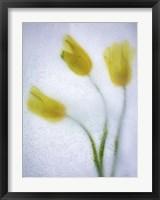 Framed Tulipanes Amarillos 37 3
