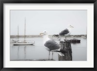 Framed Two Seagulls & Boats