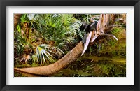 Framed Oriental darter (Anhinga melanogaster) on a tree, Boynton Beach, Palm Beach County, Florida, USA