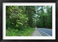 Framed Redwood trees and Rhododendron flowers in a forest, U.S. Route 199, Del Norte County, California, USA