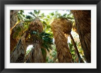 Framed Low angle view of palm trees, Palm Springs, Riverside County, California, USA