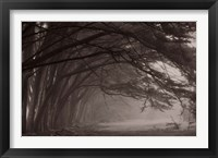 Framed Cypress trees at misty morning, Fort Bragg, California, USA