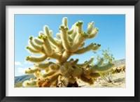 Framed Cactus at Joshua Tree National Park, California, USA