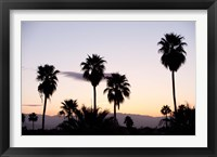 Framed Silhouette of palm trees at dusk, Palm Springs, Riverside County, California, USA