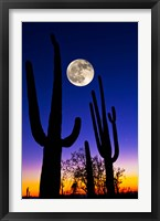 Framed Moon over Saguaro cactus (Carnegiea gigantea), Tucson, Pima County, Arizona, USA