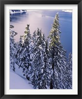 Framed Snow Covered Trees at South Rim, Crater Lake National Park, Oregon