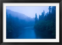 Framed River passing through a forest in the rainy morning, Jedediah Smith Redwoods State Park, Crescent City, California, USA