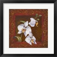 Orchid Study I Framed Print