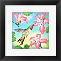 Framed Bahama Woodstar In Orchid Tree