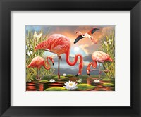 Framed Flamingos