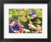 Framed Koi Pond III