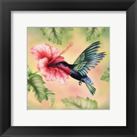 Framed Purple-Throated Carib