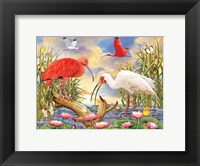 Framed Scarlet And White Ibis