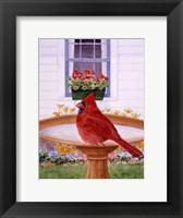 Framed Cardinal And Geraniums