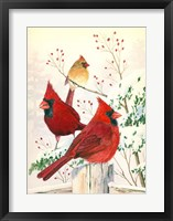 Framed Cardinals In Winter