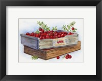 Framed Cranberry Crates