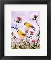 Framed Goldfinch and Thistle