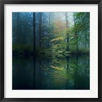 Framed Forest