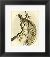 Framed Greater Bird I