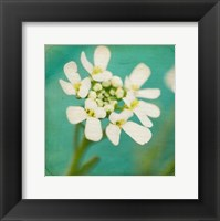 Framed White Flowers III
