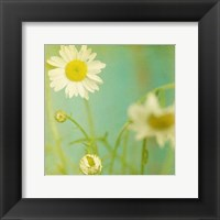 Framed White Flowers IV