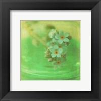 Framed White Flowers VII