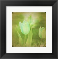 Framed White Flowers VIII