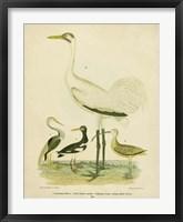Framed Antique Crane & Heron