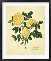 Framed Double Yellow Rose