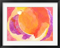 Cabbage Rose V Framed Print