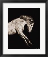 Framed Horse Portrait IV